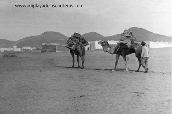 Camellos en Guanarteme. Sobre 1930