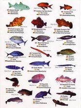 Colección-Identificador de fauna marina IV