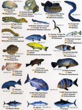Colección-Identificador de fauna marina I