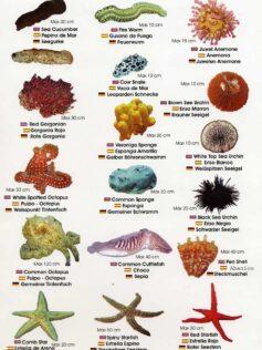 Colección-Identificador de fauna marina II