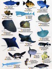 Colección-Identificador de fauna marina III