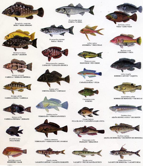 Identificador de nuestros peces 1