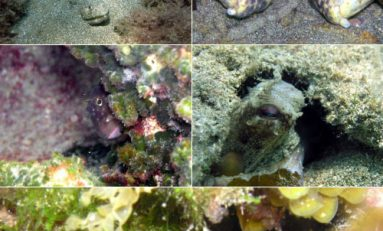 """La maravillosa vida que esconden los fondos marinos de la Playa de Las Canteras """"El escondite"""""""