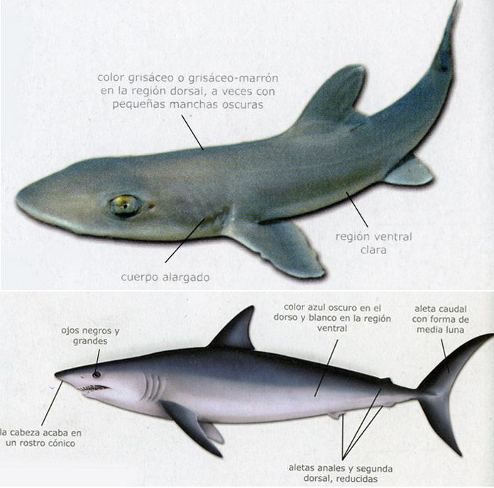 """Nuestros """"tiburones"""" (1ª parte)"""