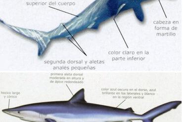"""Nuestros """"tiburones"""" (2ª parte)"""