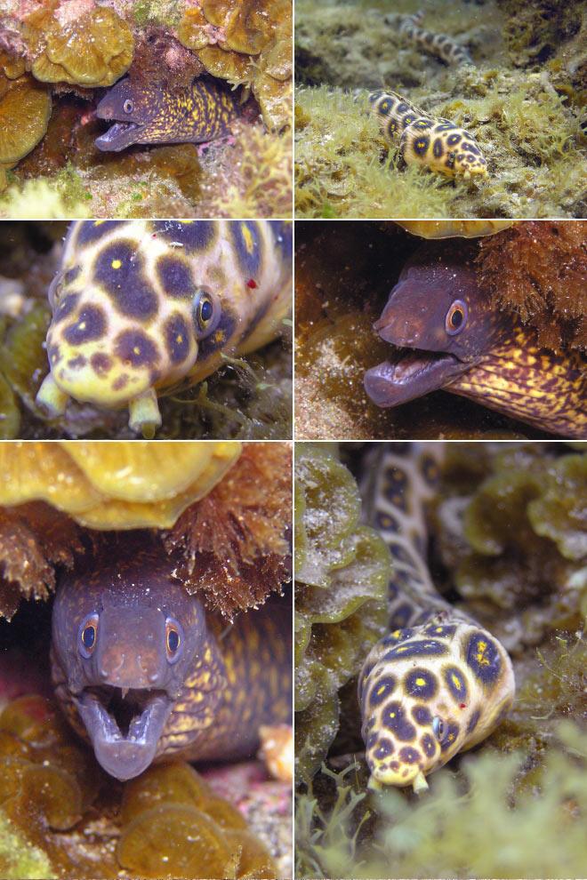 La maravillosa vida que esconden los fondos de la Playa de Las Canteras «El culebrón del verano»