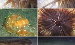 """La maravillosa vida que esconden los fondos de la Playa de Las Canteras """"Esplendor en la noche"""""""