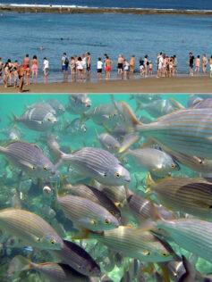 """La maravillosa vida que esconden los fondos de la Playa de Las Canteras """"La multiplicación de panes y peces"""""""