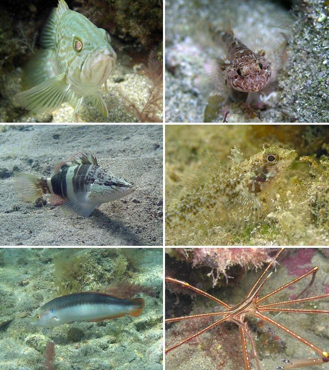 La maravillosa vida que esconden los fondos de la Playa de Las Canteras «Con sabor agridulce»