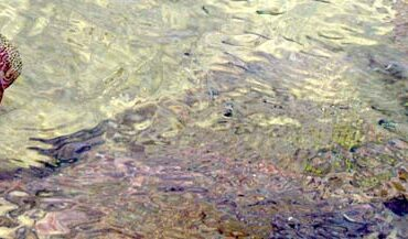 De cuando Juan Canario se bañó en Las Canteras y se salvó gracias a las aguavivas