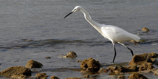 Las aves de la Bahía de El Confital