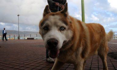 ¿Puedo sacar al perro o salir al parque? Dudas cotidianas sobre el COVID-19