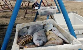 Por qué comer pescado reduce el riesgo de sufrir enfermedades cardiovasculares