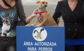 3.000 firmas por una playa para perros en Las Palmas de Gran Canaria
