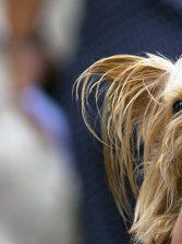 Podrás llevar tu perro por el paseo de Las Canteras si va dentro de un traspontín