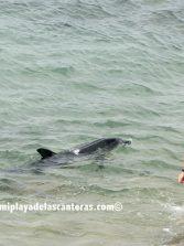 Las Canteras, una playa que debe desvivirse en el cuidado de su biodiversidad