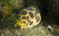 Flora y fauna de la playa de Las Canteras