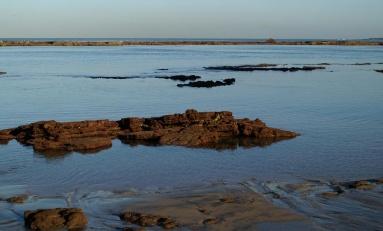 Las olas de calor marinas amenazan la biodiversidad de los océanos
