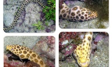 La biodiversidad de la Bahía de El Confital: Carmelita