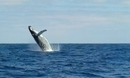 El salto de la ballena en La Isleta