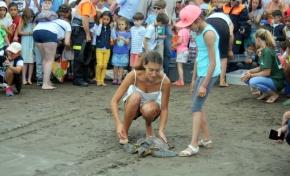 Cinco tortugas vuelven al mar en San Cristóbal con motivo de la celebración en la capital del Día Mundial de los Océanos