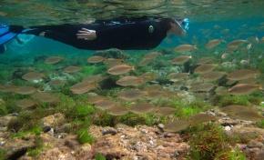 Practica snorkel con nosotros. Rutas de diciembre