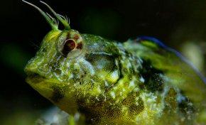 Transición Ecológica elabora una guía visual de identificación de tres familias de peces de las islas
