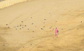 Las palomas de Las Canteras, una plaga sin control