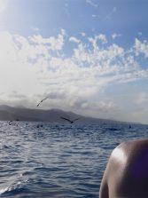 Delfines y pardelas en Las Canteras