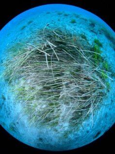 Hacia un nuevo acuerdo internacional que proteja la biodiversidad en alta mar