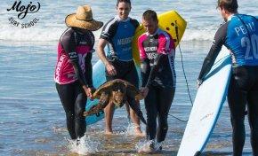 Surferos rescatan a una tortuga