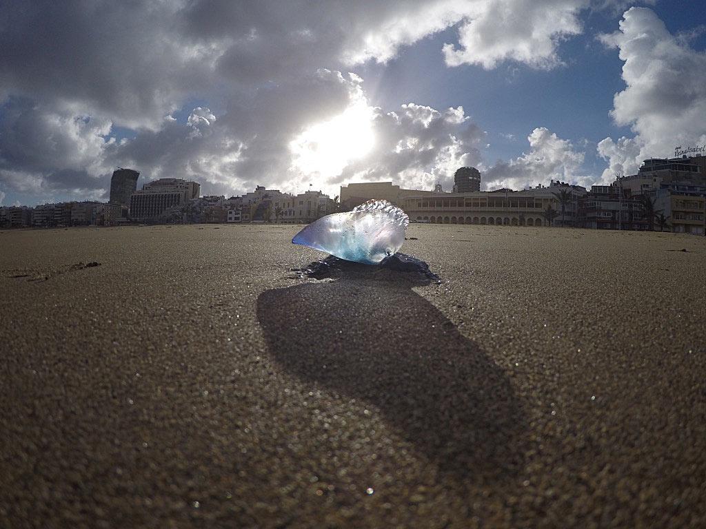 Parte diario e información sobre la presencia de aguavivas o medusas en la playa de Las Canteras