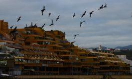 El exceso de palomas pone en riesgo la salud de Las Canteras