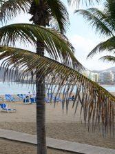 La ULPGC estudia el impacto humano en las playas a través de su vegetación