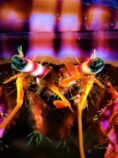 Nuestros crustáceos