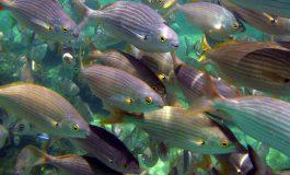 Enamórate de nuestro acuario