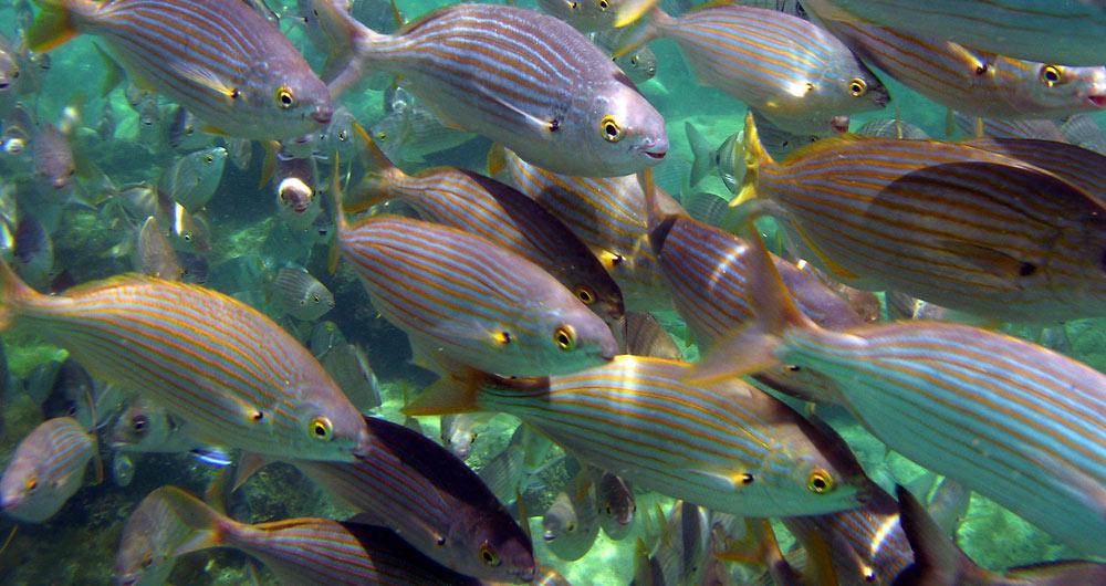 Se publica el primer artículo científico específico sobre la vida marina de la playa de Las Canteras