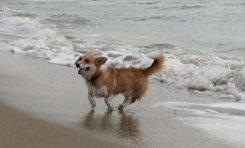 ¿Es viable un espacio en Las Canteras para que se bañen los perros?