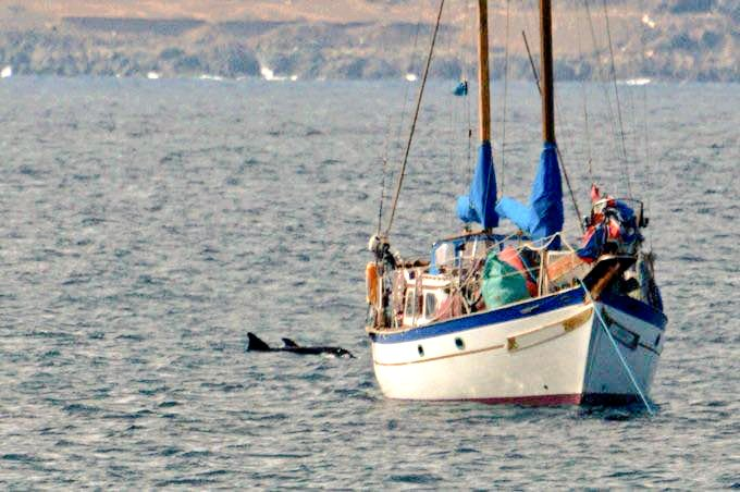 Un trabajo sobre los contaminantes ambientales que afectan a los cetáceos en Gran Canaria gana la Beca de Investigación Simón Benítez Padilla