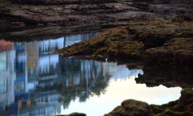 Los Lisos a bajamar, un oasis único