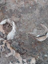 El litoral oriental, de la Bahía del Confital, durante el pleistoceno superior