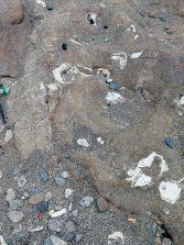 Total abandono en El Confital de uno de los más importantes yacimientos paleontológicos de Canarias