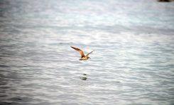 El vuelo del zarapito