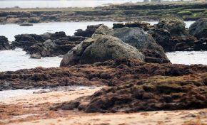 Las rocas de Las Canteras