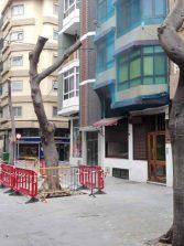 La porteña calle Pedro del CastilloWesterling se queda sin sus laureles de indias