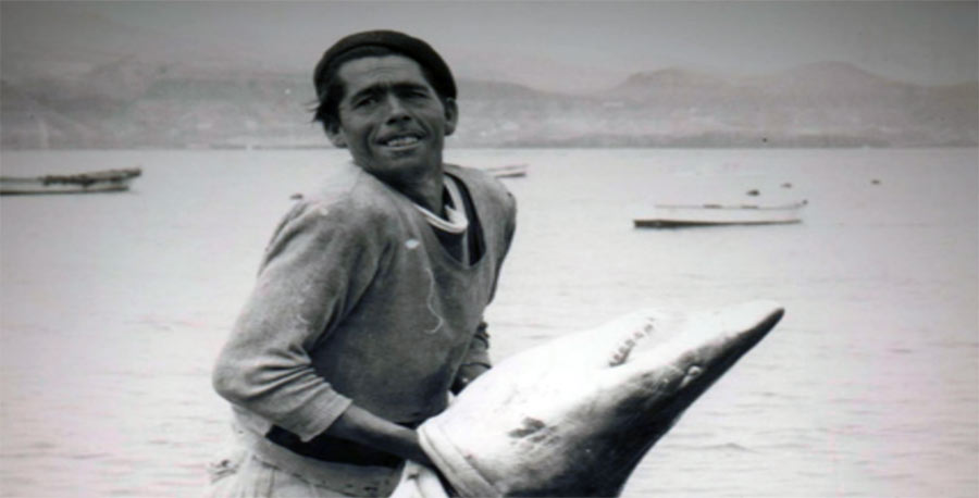 Cuando los tiburones pululaban por la punta del Morro
