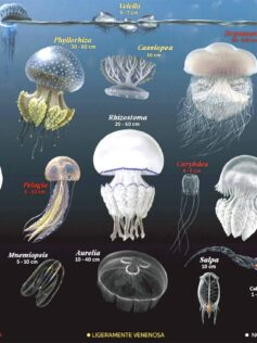 Identificador de medusas o aguavivas