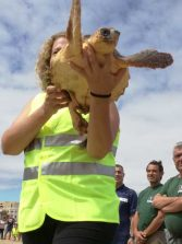 La suelta de una tortuga por el Día Mundial de los Océanos ha servido para visibilizar la fragilidad de la vida marina frente a las agresiones antrópicas