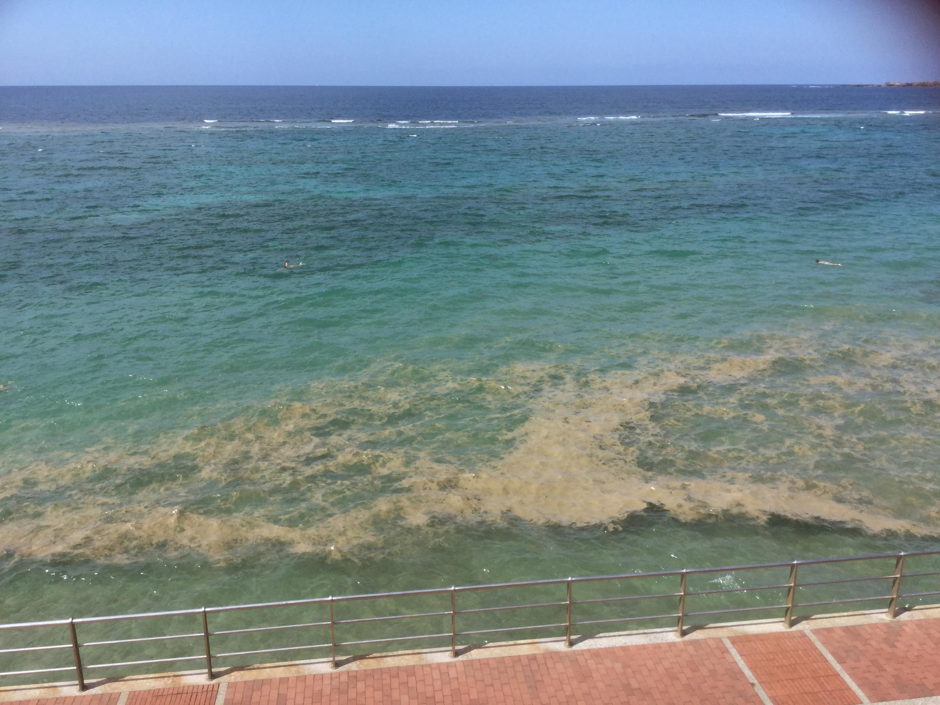 Sanidad recuerda las precauciones básicas en caso de aparición de floraciones masivas de 'microalgas' en las playas