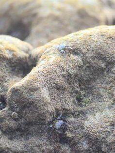 Los dos cangrejos. Una fábula de Esopo